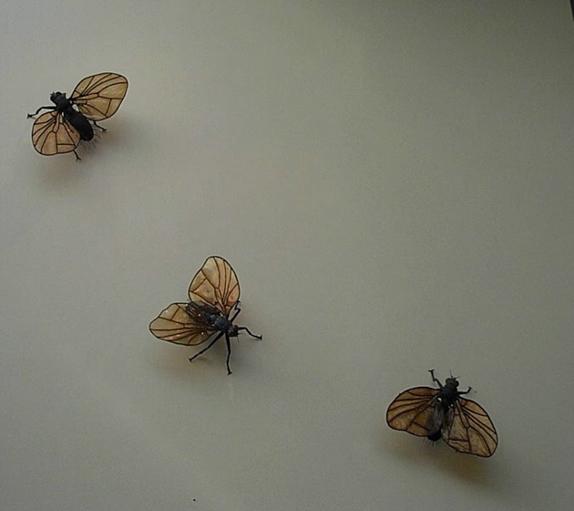 06-440-Sand Flies
