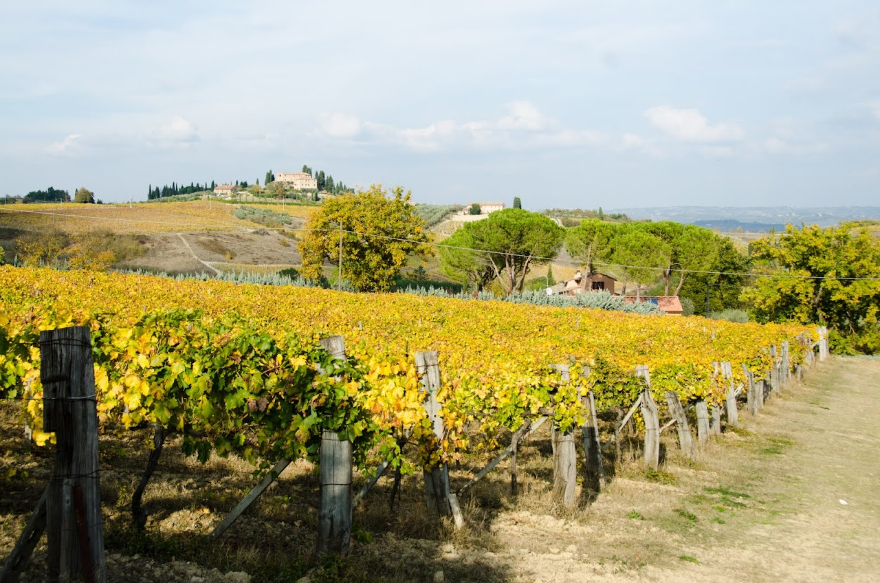 San Gimignano vineyards