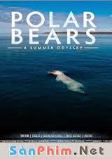 Gấu Bắc Cực Vietsub