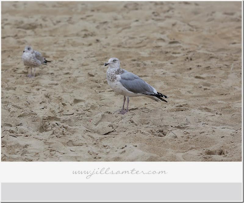 birdsand