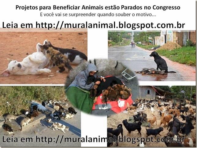 Projetos para Beneficiar Animais estão Parados no Congresso