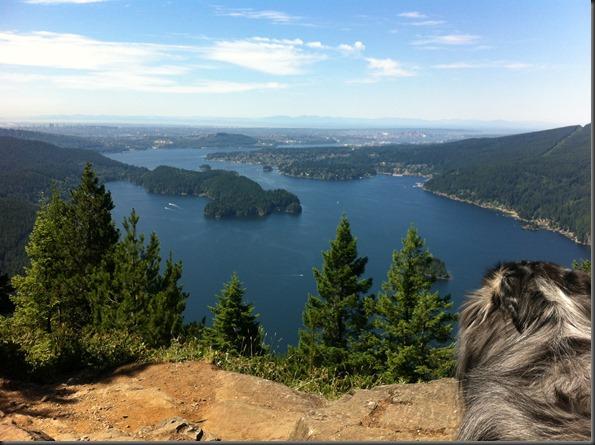 Mojo on Diez Vistas Trail lookout