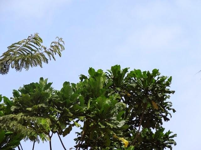 Libreville soleil