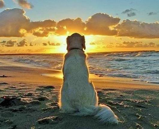 sunsetdogr