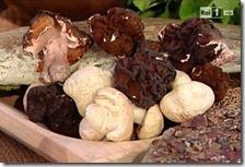 Funghi mostrati alla Prova del Cuoco