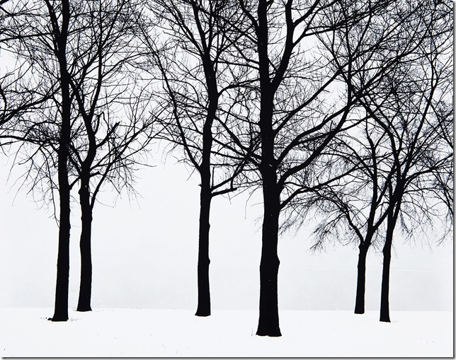 Harry Callahan_Chicago (Trees in Snow), 1950