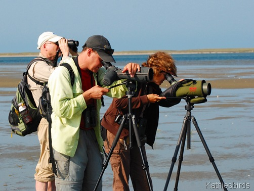 1. Birding team-kab