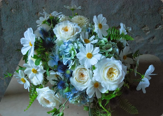 cosmos 999213_334448930024617_1103536358_n cornelia mcnamara flowers