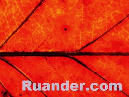 Fall Color 5 Ruander