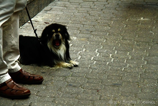 milton_20110929_vaci