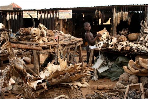 World's Largest Voodoo Market - Togo Akodessewa 01