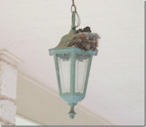 Baby Birds 005