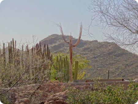 mt-and-cactus