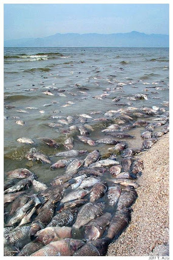 Salton Sea - The Accidentally Created Lake | Amusing Planet
