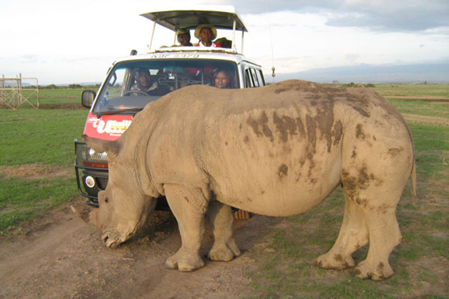Tourists take a closer look at a northern white rhino at the Ol Pejeta Conservancy in Nyeri, central Kenya. Scientists are working on a new plan to save this endangered species from extinction. Photo: NATION MEDIA GROUP