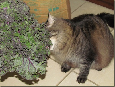 baxter eating kale