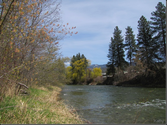 Okanagan River at the campground