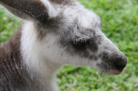 Skippy close-up