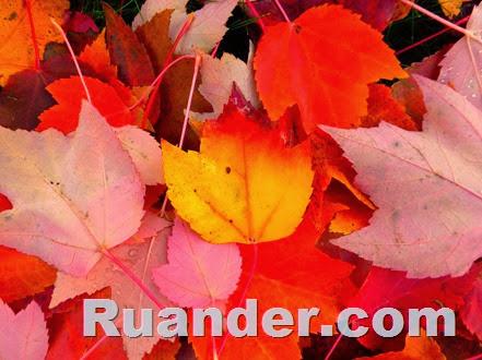 Fall Color 1 Ruander