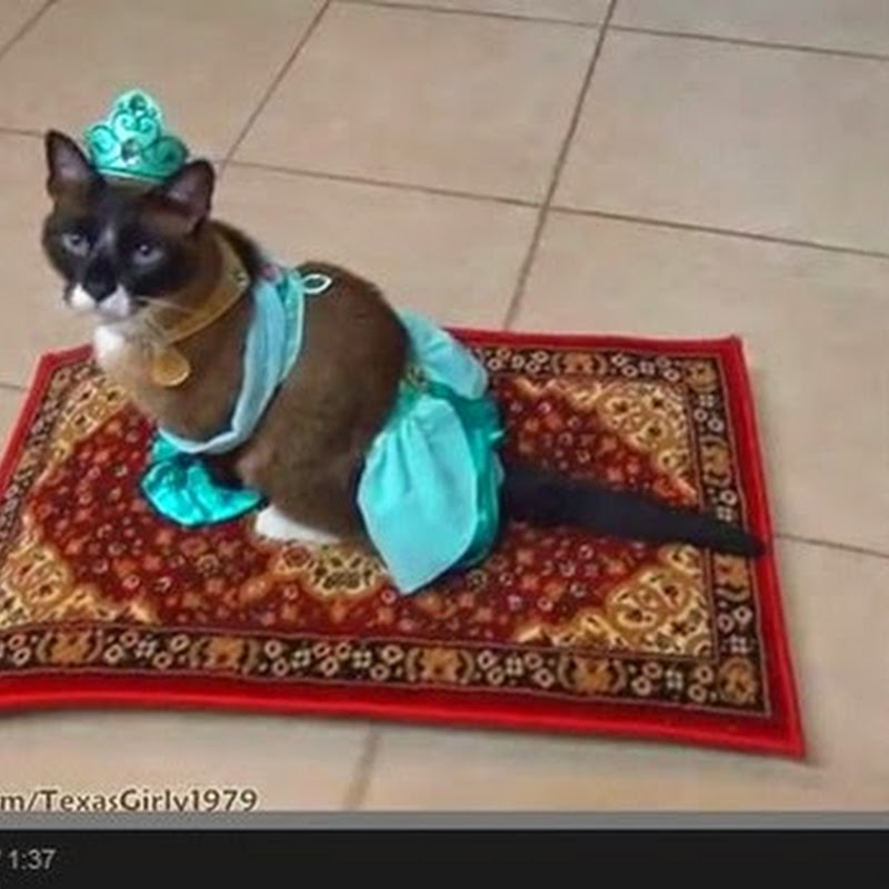 Γάτα ντυμένη σαν πριγκίπισσα  της Disney