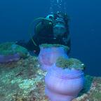 Silvia sucht Anemonenfische