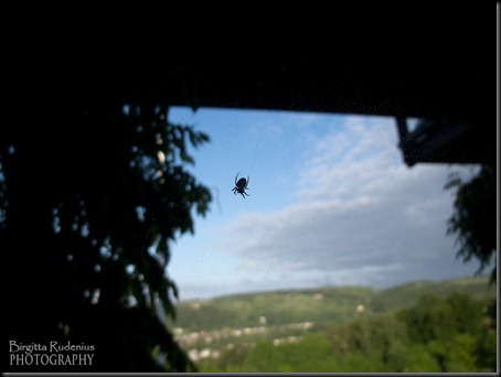 sky_20120617_spider