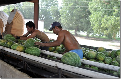 watermelons 11 071211 (29)