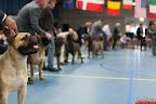 20130511-BMCN-Bullmastiff-Championship-Clubmatch-2310.jpg