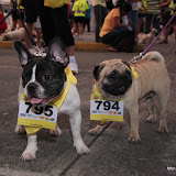 Pet Express Doggie Run 2012 Philippines. Jpg (17).JPG