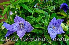 Glória Ishizaka - Jardim Botânico Nagai - Osaka 44