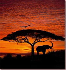 african-sunset-wall-mural