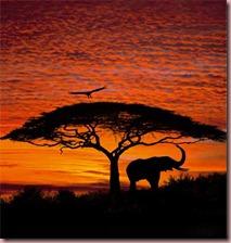 african-sunset-wall-mural