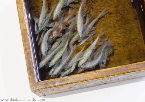 peixes pintados em 3d desbaratinando (3)