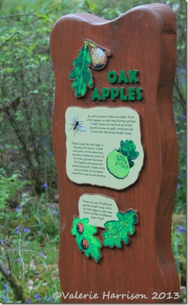 3-oak-apples