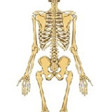 esqueleto costas.jpg