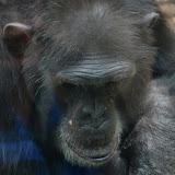 Heidelberger-Zoo_2012-04-09_812.JPG