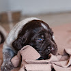 Puppies_Tria-01401.jpg