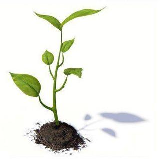 petite-plante2