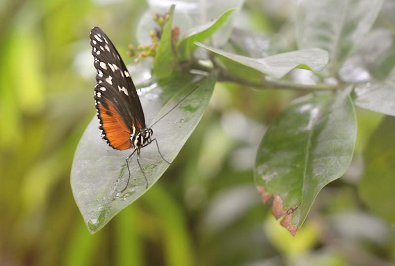 Botanical Garden 010