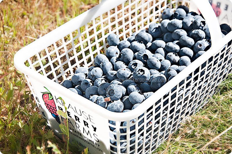 Basket-of-blueberries-(1)
