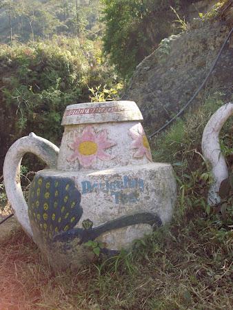 Obiective turistice India: ceaiul de dupa amiaza in Rock garden Darjeeling