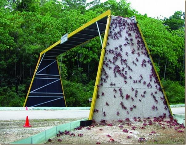 Ponts pour animaux - passages à faune (24)