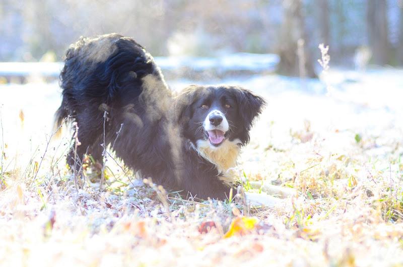 snow dog-3513