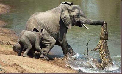Amazing Animals Pictures (9)