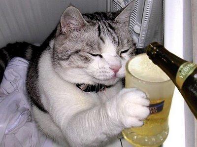 gato_cerveja_portugal_porreiro