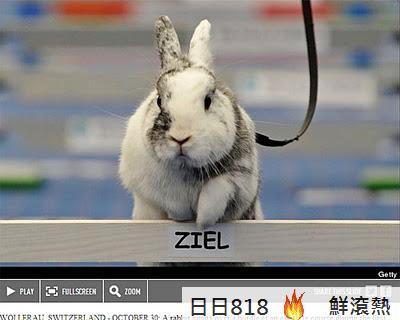 兔界劉翔 跨欄錦標賽