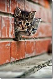 Fotos de gato buscoimagenes (41)