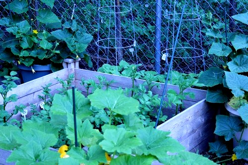 garden_051912_0012