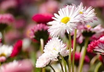 flowers-1368713605X10[1]
