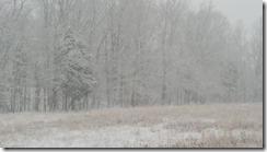 early snow field 2